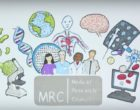 How peer review is important for grant applications, particularly at the MRC