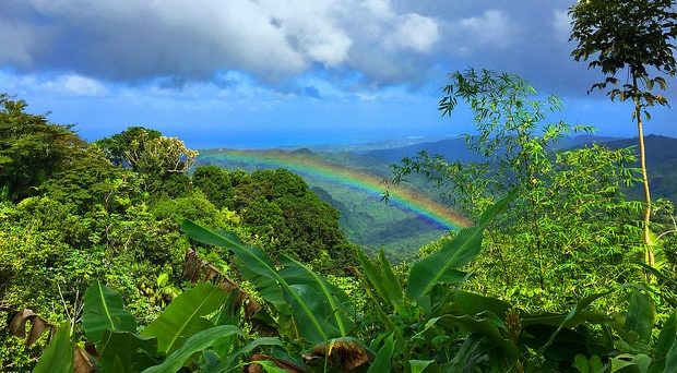 Being Queer In The Jungle The Unique Challenges Of Lgbtq