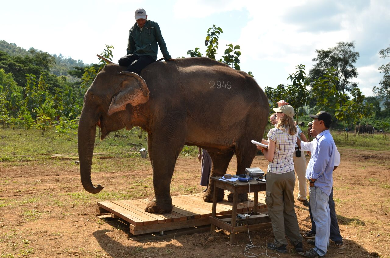 Weighing an elephant