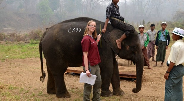 Measuring the growth of Asian elephants