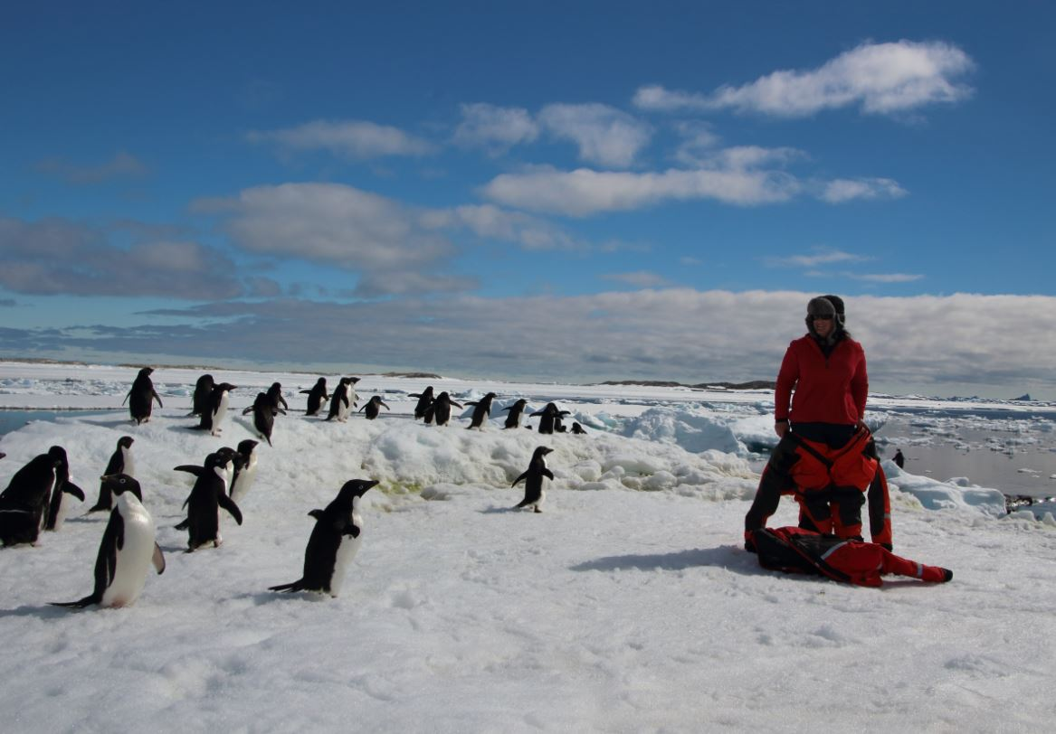 Jane working with the penguins