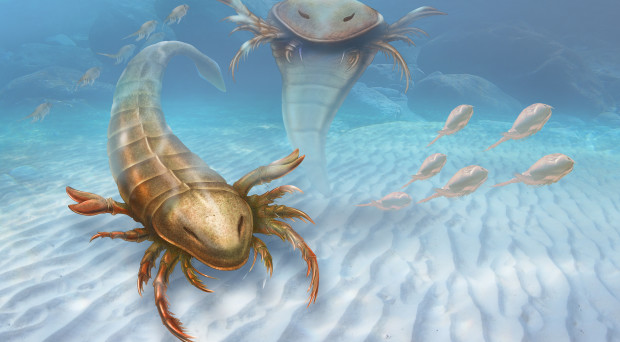 Eurypterids-3-1-Horizontal-Cropped-CREDIT-Patrick-Lynch-Yale-University-620x342