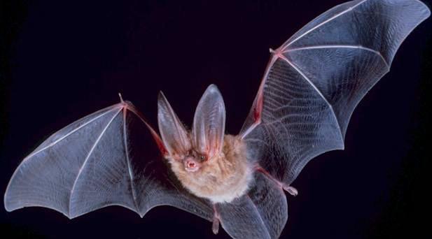What can bats teach us?