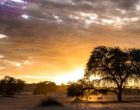 2016's overall winner by Davide Gaglio, the striking landscape of the Kgalagadi Transfrontier Park during sunrise.