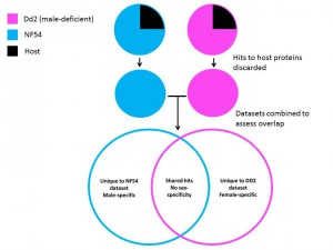 Figure 2: Identification of male and female-specific proteins by comparison of male-deficient and male-competent strains of P. falciparum.