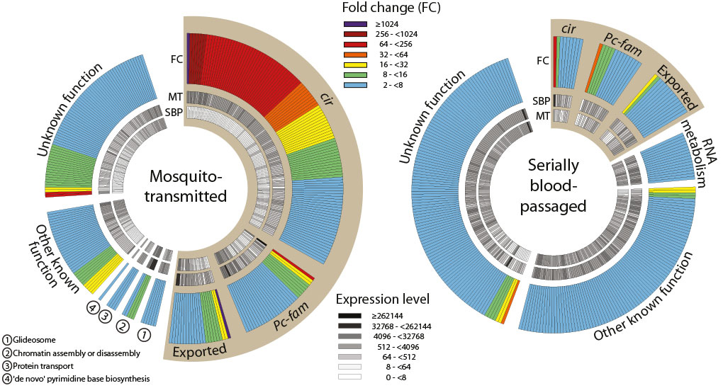 Gene expression profiles in mosquito-transmitted and blood-passaged populations of P. chabaudi  (from PJ Spence Nature 498, 228-231 (2013) doi: 10.1038/nature12231)
