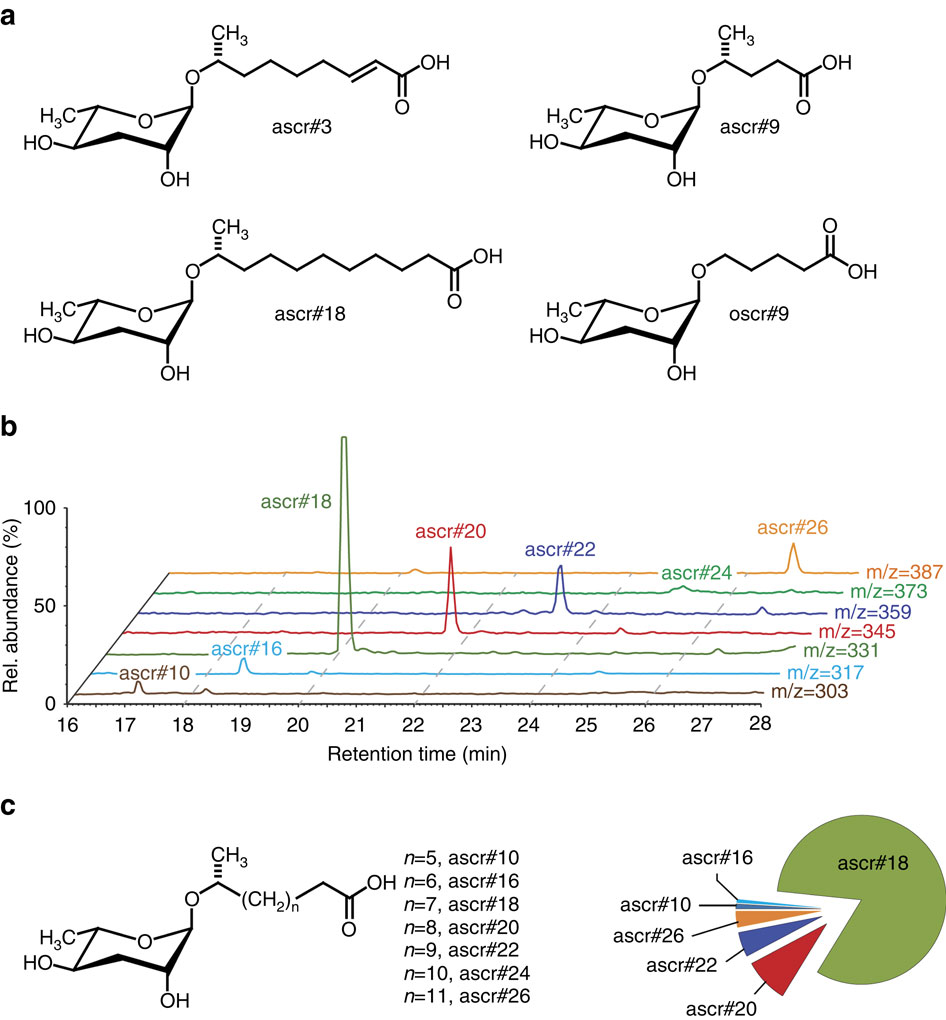 (a) Examples of ascarosides previously identified. (b) HPLC-MS analysis of nematode exo-metabolome samples, showing seven detected ascarosides. (c) Chemical structures of identified ascarosides and relative quantitative distribution. Source: http://www.nature.com/ncomms/2015/150723/ncomms8795/fig_tab/ncomms8795_F1.html