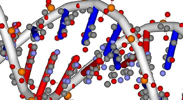 Stress may change DNA methylation patterns