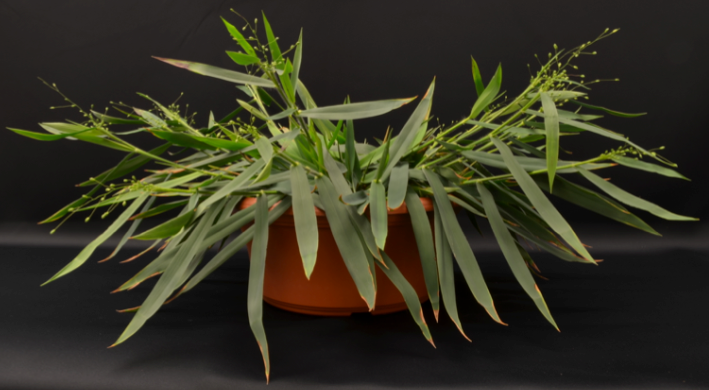 an analysis of the topic of the c3 and c4 plants for the concept of photosynthesis Be sure to retain replicate samples of corn stalk material for stable isotope analysis  63 transformation of c3 plants into c4  in c 3 plants, photosynthesis .