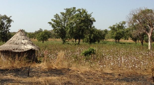Faladje is a small village with a population of about 5000 and lies in the southern central part of Mali. Most inhabitants live off agriculture of cotton, millet, mango, watermelons and livestock.
