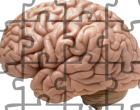 Putting together the evidence for brain morphology and schizophrenia