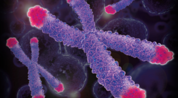 spectracell_telomere1-resized-600