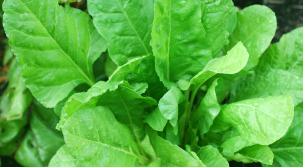 Spinach: a leafy vegetable high in magnesium.