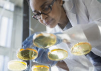 Focused scientist examining petri dishes
