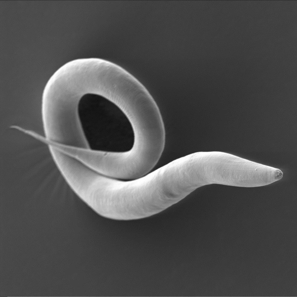 The Secret Hitch-hikes Of A Notorious Worm