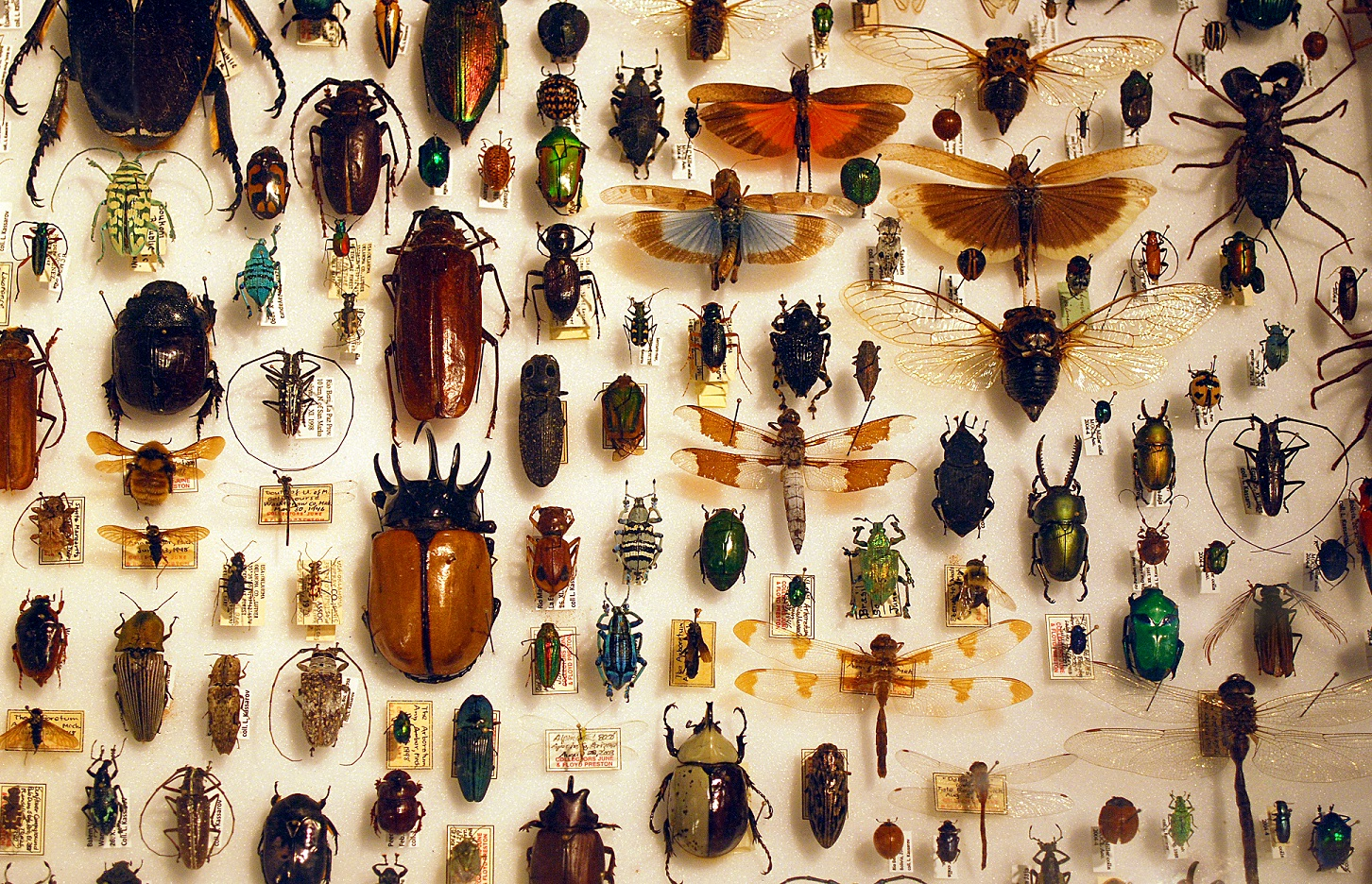 insect collecting butterfly species endangered nets collect obscure