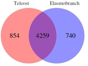 Figure 2 From Marra et al, CC The authors. Venn diagram of the MCLBlastLINE sequence clusters shared between teleosts and elasmobranchs (intersection of the diagram) as well as those unique to each of the groups