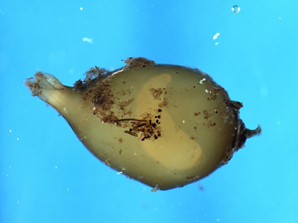 The evolution of earthworms - BMC Series blog