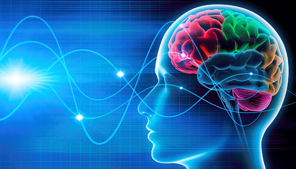 The Human Brain Atlas Present And Future Bmc Series Blog