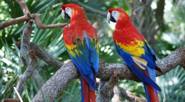 What Do Color Vision And Red Coloration In Birds Have In