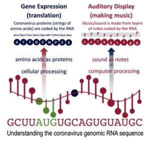 Temple, M.D. Real-time audio and visual display of the Coronavirus genome. BMC Bioinformatics 21, 431 (2020)
