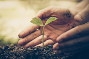 Hand of a farmer nurturing a young green plant with natural green background .