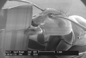 A carpenter and. Image from https://www.cosmiclight.com/imagegalleries/sem1c.htm