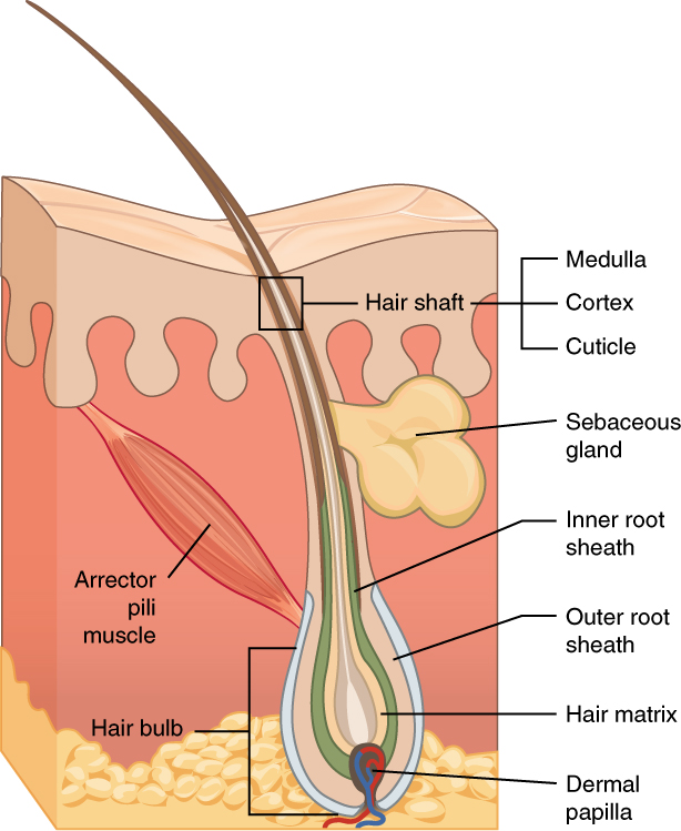 Mites in your follicles - BugBitten