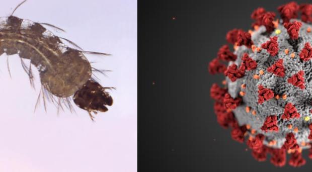 a malária plazmodium magja a rossz lehelet okozza a kezelés áttekintését