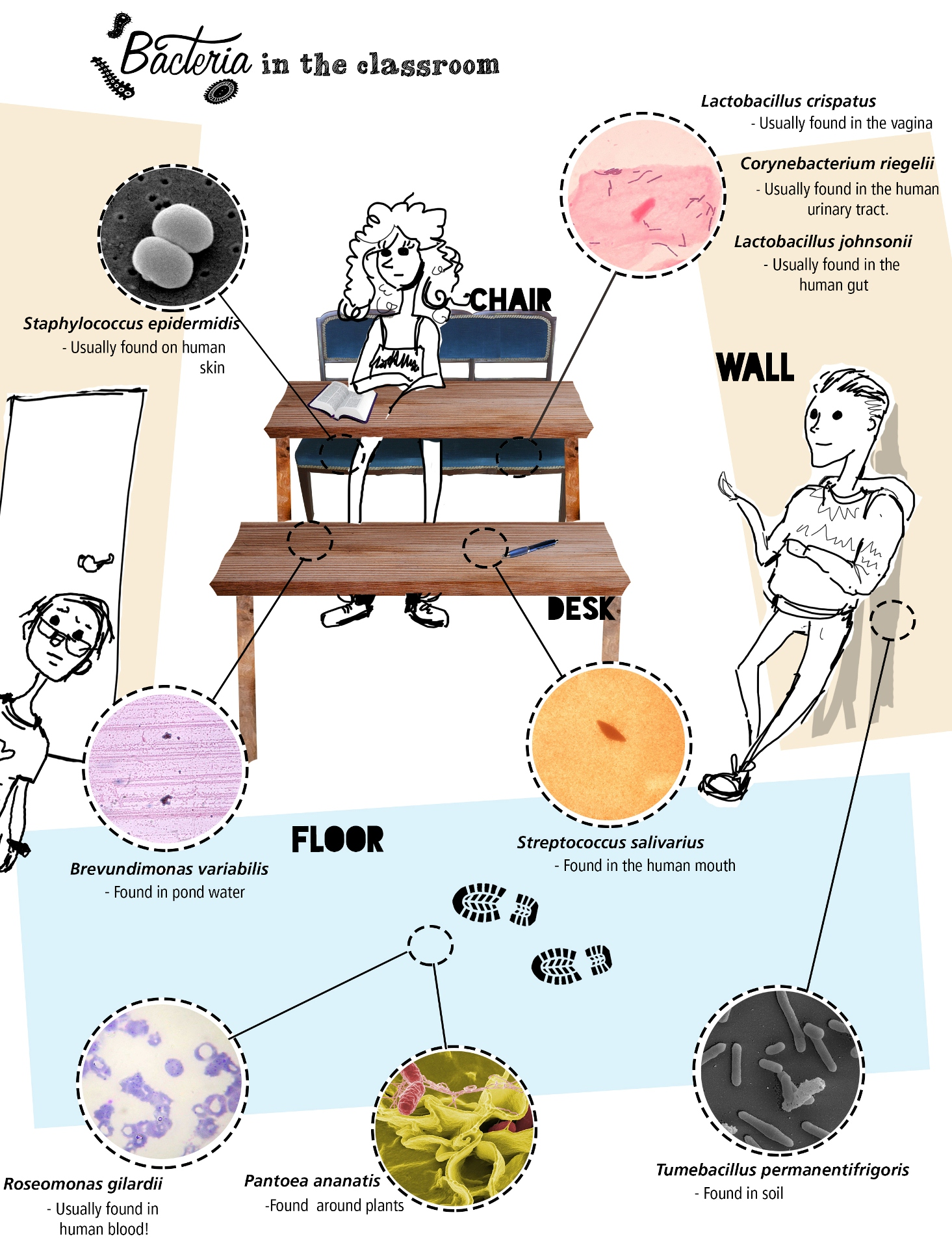 Who's been sitting in my chair? The microbes that live ...