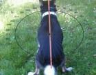 Body orientation in dogs from Hart et al. Frontiers in Zoology 2013