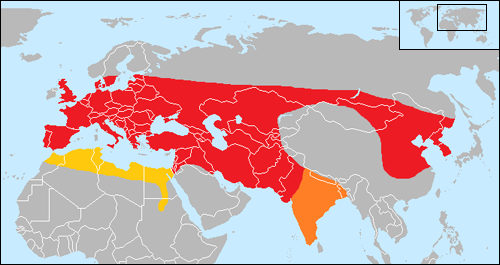 The former distribution range of the aurochs (approximately 10,000 BP). The range of the Bos primigenius primigenius subspecies is coloured red; the range of the B. p. namadicus subspecies is coloured orange; and the range of the B. p. africanus subspecies is coloured yellow.